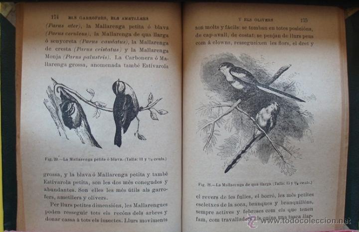 Libros antiguos: LIBRO ELS AUCELLS MÉS ÚTILS Á LA AGRICULTURA DE CATALUNYA EMILI TARRÉ AÑO 1902 - Foto 4 - 40190825