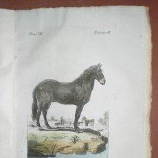 Libros antiguos: BUFFON, CONDE DE: HISTORIA NATURAL, GENERAL Y PARTICULAR ... TOMO VII. MADRID 1798. Lote 44953709