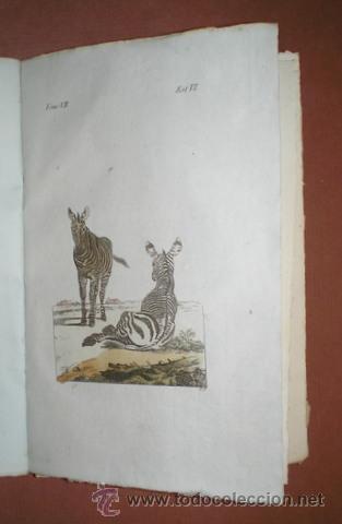 Libros antiguos: BUFFON, Conde de: HISTORIA NATURAL, GENERAL Y PARTICULAR ... Tomo VII. Madrid 1798 - Foto 4 - 44953709