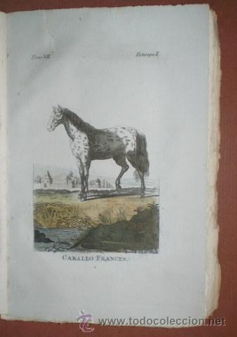 Libros antiguos: BUFFON, Conde de: HISTORIA NATURAL, GENERAL Y PARTICULAR ... Tomo VII. Madrid 1798 - Foto 6 - 44953709