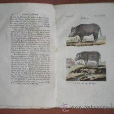 Libros antiguos: BUFFON, CONDE DE: HISTORIA NATURAL, GENERAL Y PARTICULAR ... TOMO IX. HIJA DE IBARRA, MADRID 1806. Lote 44954030