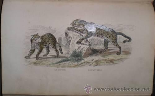 Libros antiguos: BUFFON: OEUVRES COMPLETES. 8 vols. 1852 - Foto 2 - 44954506