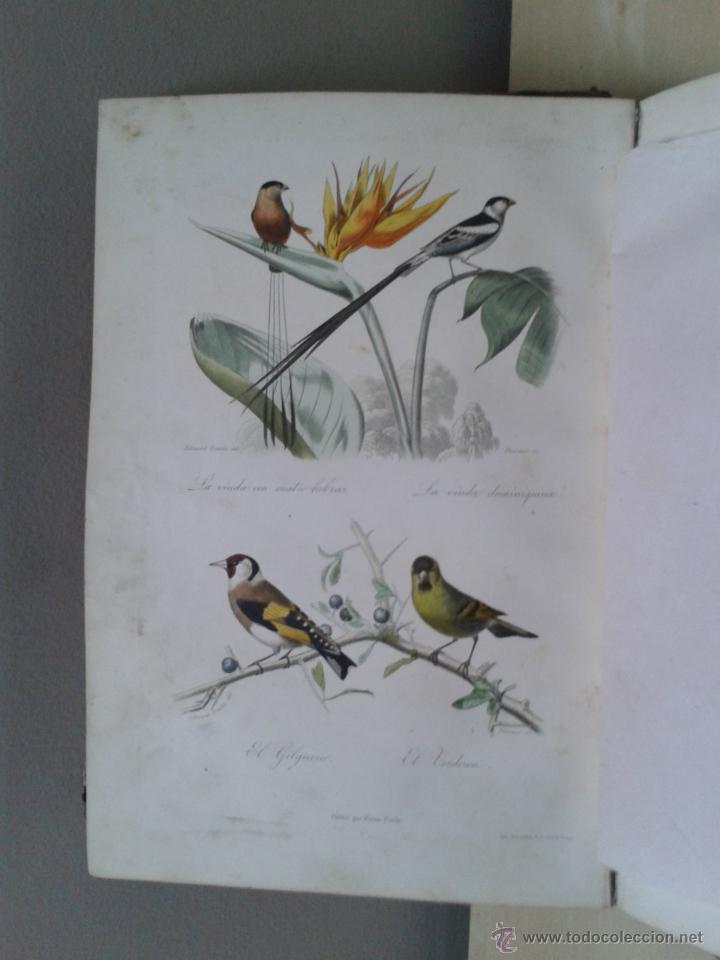 Libros antiguos: LOS HÉROES Y LAS GRANDEZAS DE LA TIERRA, 8 TOMOS. AÑO 1854 - Foto 113 - 45573799