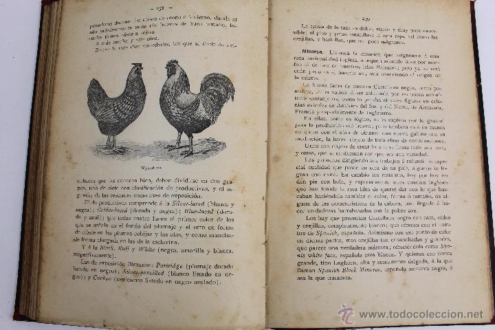 Libros antiguos: L- 890. AVICULTURA INDUSTRIAL. JUAN RUBIO M. Y VILLANUEVA. LIBRERIA F. PUIG. BARCELONA 1911 - Foto 5 - 47144446