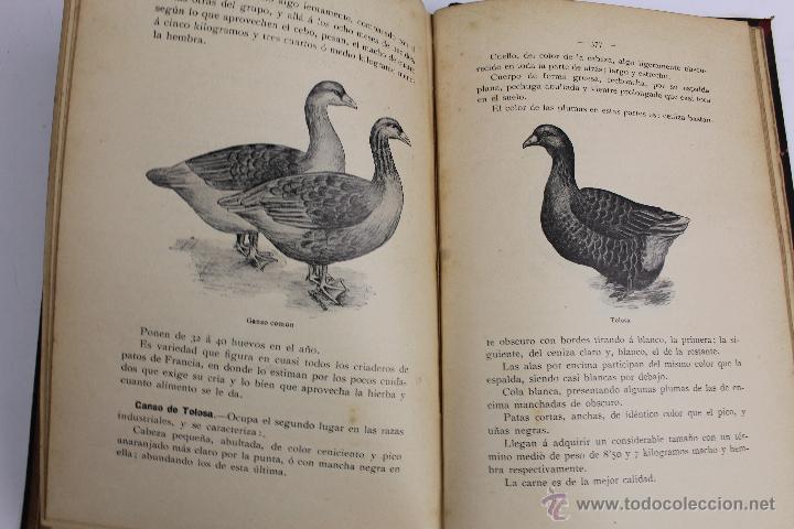Libros antiguos: L- 890. AVICULTURA INDUSTRIAL. JUAN RUBIO M. Y VILLANUEVA. LIBRERIA F. PUIG. BARCELONA 1911 - Foto 6 - 47144446
