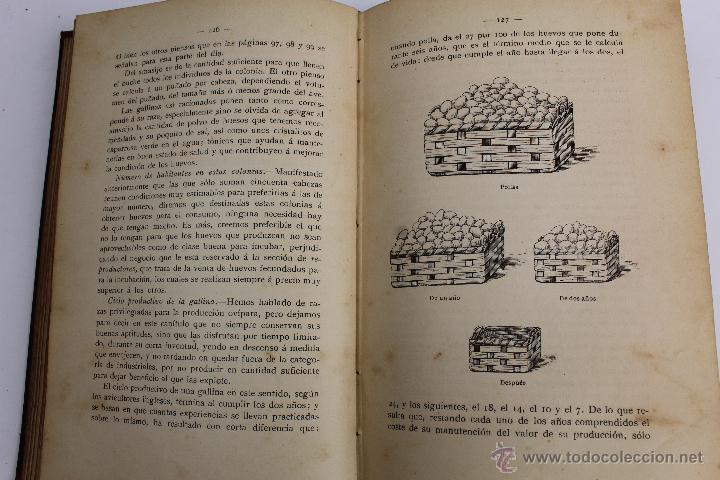 Libros antiguos: L- 890. AVICULTURA INDUSTRIAL. JUAN RUBIO M. Y VILLANUEVA. LIBRERIA F. PUIG. BARCELONA 1911 - Foto 8 - 47144446