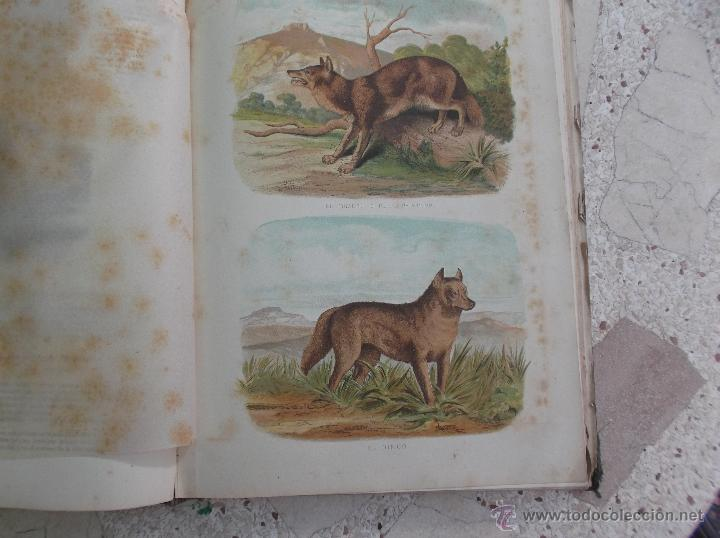 Libros antiguos: la creacion historia natural tomo-1 ,mamiferos,1872,montaner y simon editores, 34x26,880,paginas, - Foto 6 - 51009107