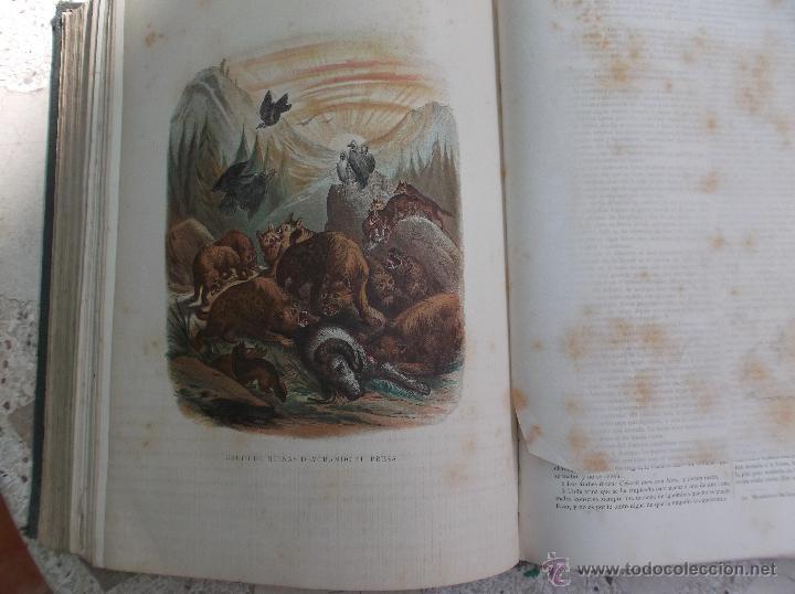 Libros antiguos: la creacion historia natural tomo-1 ,mamiferos,1872,montaner y simon editores, 34x26,880,paginas, - Foto 7 - 51009107
