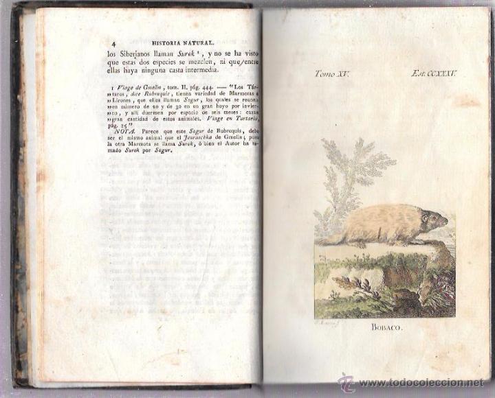 Libros antiguos: BUFFON. HISTORIA NATURAL, GENERAL Y PARTICULAR. TOMO XV. MADRID, 1798. ESCRITA EN FRANCÉS. - Foto 8 - 53893308