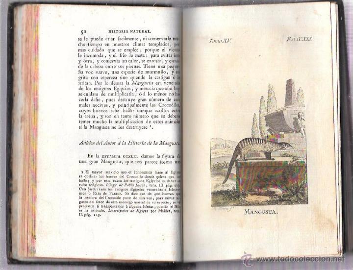 Libros antiguos: BUFFON. HISTORIA NATURAL, GENERAL Y PARTICULAR. TOMO XV. MADRID, 1798. ESCRITA EN FRANCÉS. - Foto 9 - 53893308