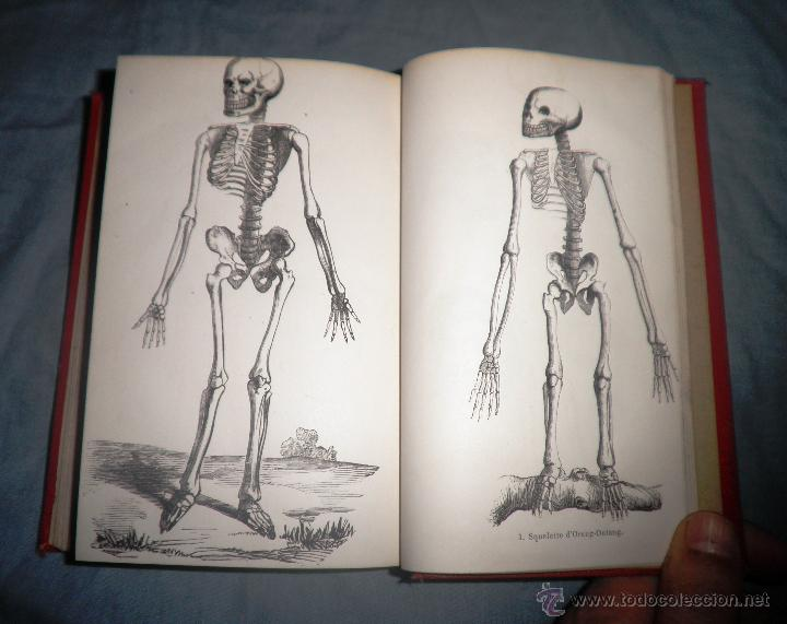 Libros antiguos: MONSTRUOSIDADES HUMANAS - AÑO 1863 - A.DEBAY - IMPRESIONANTES GRABADOS. - Foto 5 - 51761917