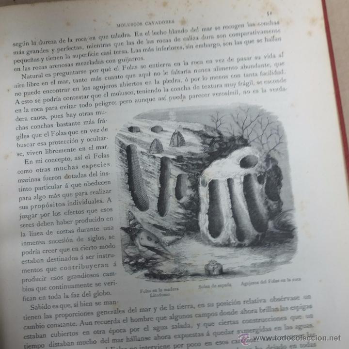 Libros antiguos: los precursores del arte y de la industria -j.g. wood -1886.550 pg - Foto 3 - 53051996