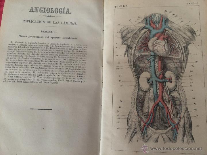 JULIAN CALLEJA.TRATADO ANATOMÍA HUMANA.VALLADOLID 1869. 4 TOMOS.99 LÁMINAS COLOR.MIOLOGIA.ANGIOLOGIA (Libros Antiguos, Raros y Curiosos - Bellas artes, ocio y coleccionismo - Otros)