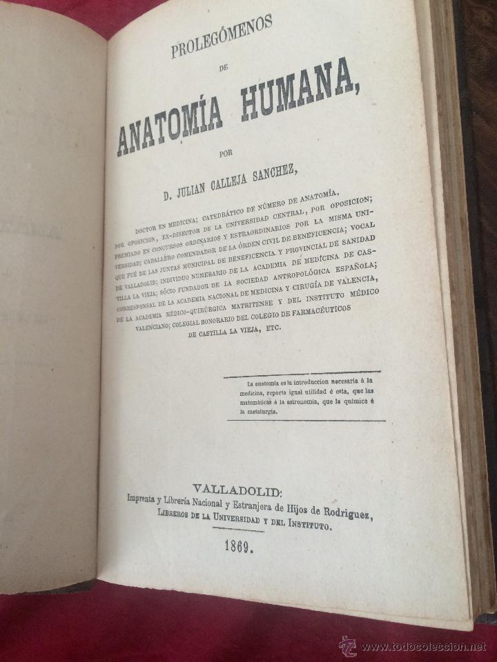 Libros antiguos: Julian Calleja.Tratado Anatomía Humana.Valladolid 1869. 4 tomos.99 láminas color.Miologia.Angiologia - Foto 2 - 53600312