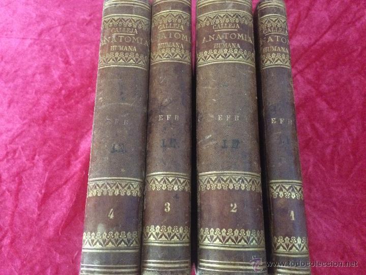 Libros antiguos: Julian Calleja.Tratado Anatomía Humana.Valladolid 1869. 4 tomos.99 láminas color.Miologia.Angiologia - Foto 3 - 53600312