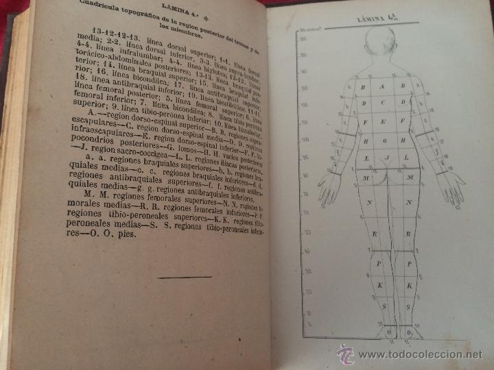 Libros antiguos: Julian Calleja.Tratado Anatomía Humana.Valladolid 1869. 4 tomos.99 láminas color.Miologia.Angiologia - Foto 4 - 53600312