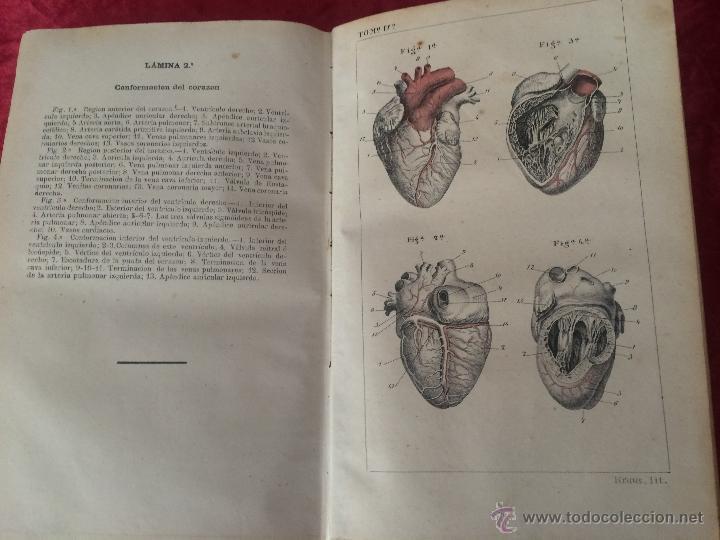 Libros antiguos: Julian Calleja.Tratado Anatomía Humana.Valladolid 1869. 4 tomos.99 láminas color.Miologia.Angiologia - Foto 5 - 53600312