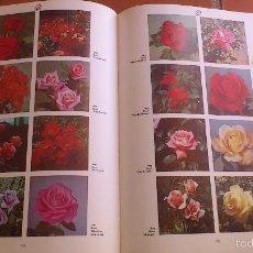 Libros antiguos: DICCIONARIO ILUSTRADO PLANTAS DE JARDIN Y DE INVERNADERO ROY HAY Y PATRIK M. SYNGE. Lote 55334299