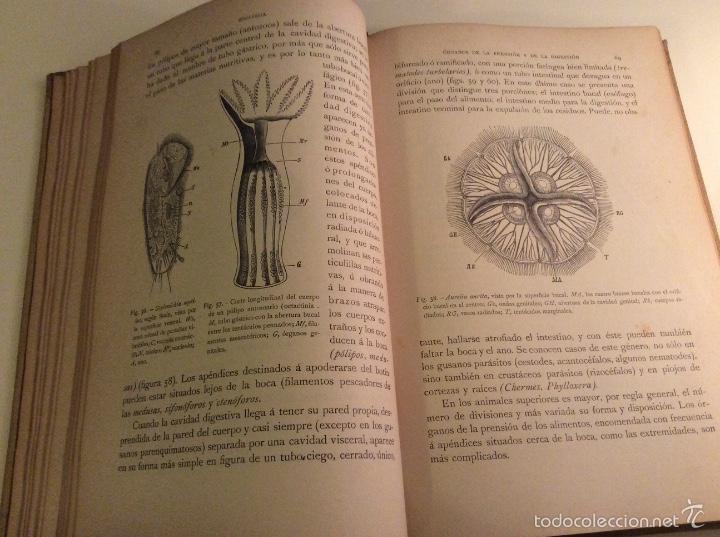 Libros antiguos: Historia Natural 1891 - Zoologia - Dr. C. Claus - Traducción Luis de Góngora - Montaner Simón editor - Foto 3 - 55951903