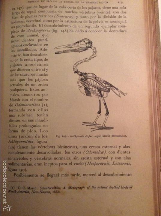 Libros antiguos: Historia Natural 1891 - Zoologia - Dr. C. Claus - Traducción Luis de Góngora - Montaner Simón editor - Foto 4 - 55951903