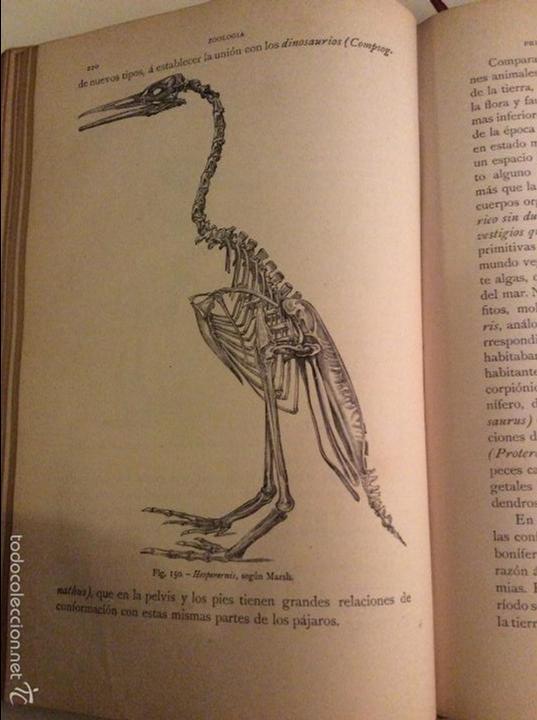 Libros antiguos: Historia Natural 1891 - Zoologia - Dr. C. Claus - Traducción Luis de Góngora - Montaner Simón editor - Foto 5 - 55951903