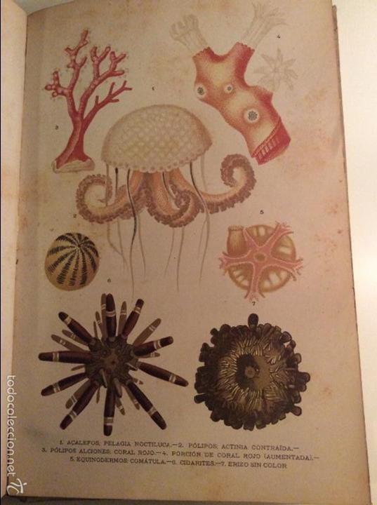Libros antiguos: Historia Natural 1891 - Zoologia - Dr. C. Claus - Traducción Luis de Góngora - Montaner Simón editor - Foto 6 - 55951903