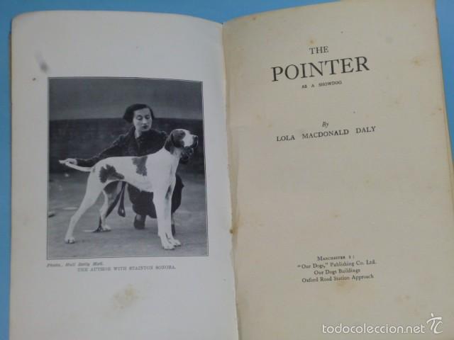 Libros antiguos: The Pointer As a Showdog - Foto 2 - 56749246