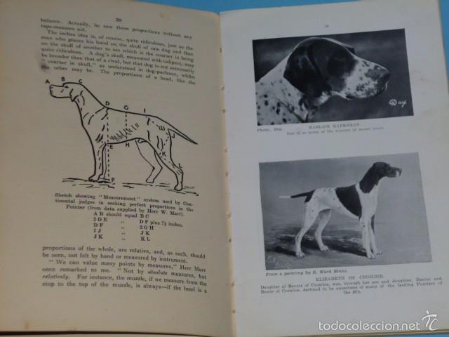 Libros antiguos: The Pointer As a Showdog - Foto 3 - 56749246
