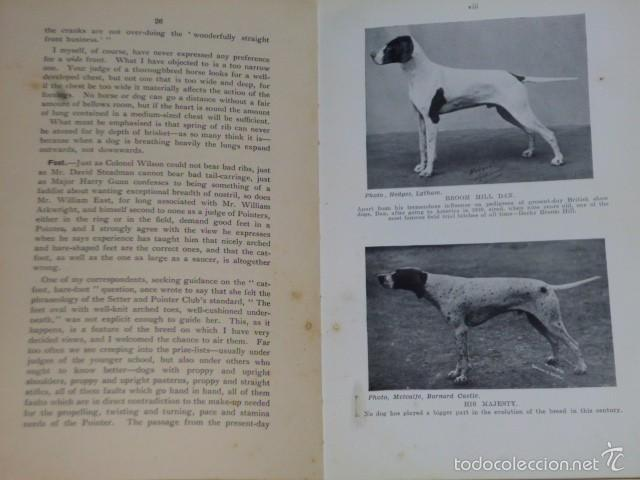 Libros antiguos: The Pointer As a Showdog - Foto 4 - 56749246