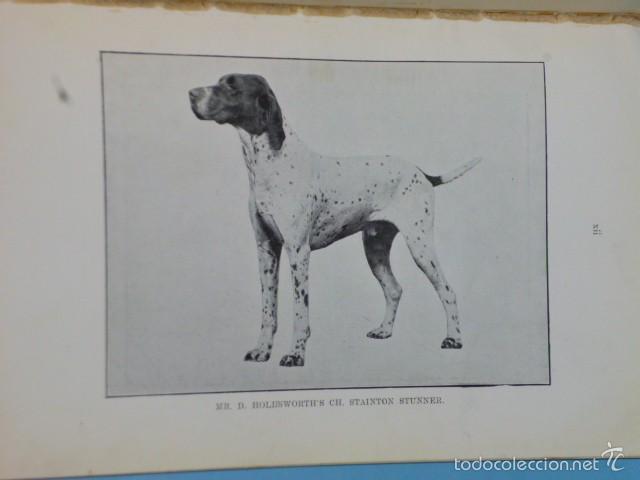 Libros antiguos: The Pointer As a Showdog - Foto 5 - 56749246