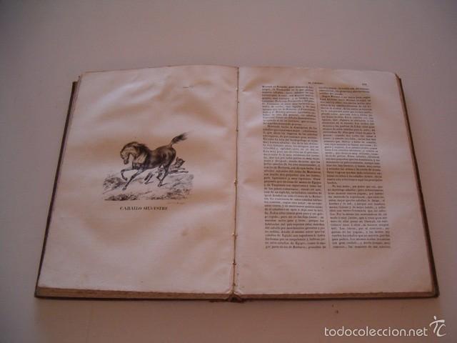 Libros antiguos: CONDE DE BUFFON. Historia Natural. General y Particular. NUEVE TOMOS EN OCHO VOLÚMENES. RM74791. - Foto 3 - 57055541
