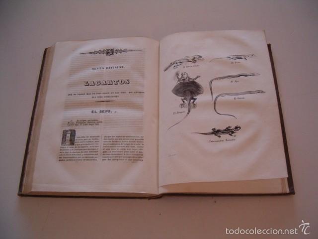 Libros antiguos: CONDE DE BUFFON. Historia Natural. General y Particular. NUEVE TOMOS EN OCHO VOLÚMENES. RM74791. - Foto 6 - 57055541