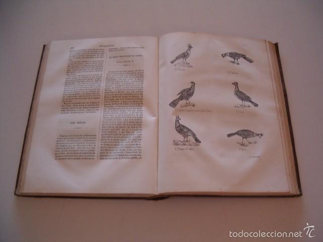 Libros antiguos: CONDE DE BUFFON. Historia Natural. General y Particular. NUEVE TOMOS EN OCHO VOLÚMENES. RM74791. - Foto 7 - 57055541