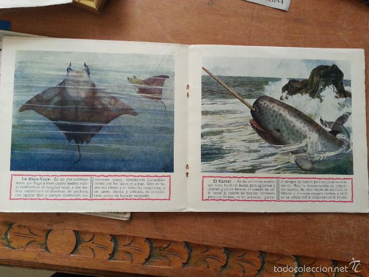 Libros antiguos: EL REINO ANIMAL PARA NIÑOS, MONSTRUOS MARINOS, RAMON SOPENA . - Foto 2 - 57255711