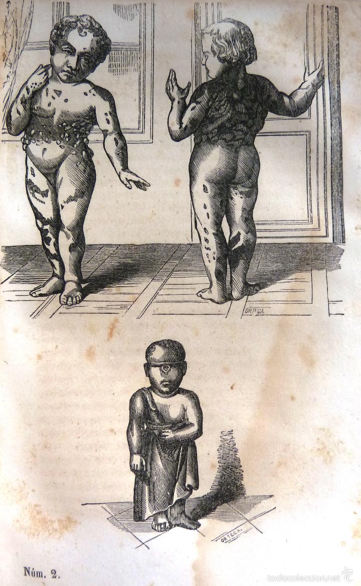 Libros antiguos: OBRAS COMPLETAS DE BUFFON - TOMO III - HISTORIA NATURAL DEL HOMBRE - MADRID 1847 - Foto 6 - 23874773