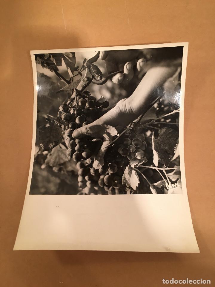 FOTOGRAFIA ANTIGUA - YAN - TOULOUSE - VENDIMIA - BARRICAS - VINO - VINOS - UVAS - ENOLOGIA (Libros Antiguos, Raros y Curiosos - Cocina y Gastronomía)