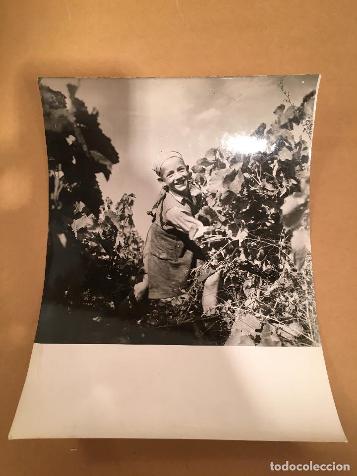 Libros antiguos: FOTOGRAFIA ANTIGUA - YAN - TOULOUSE - VENDIMIA - BARRICAS - VINO - VINOS - UVAS - ENOLOGIA - Foto 4 - 65312199
