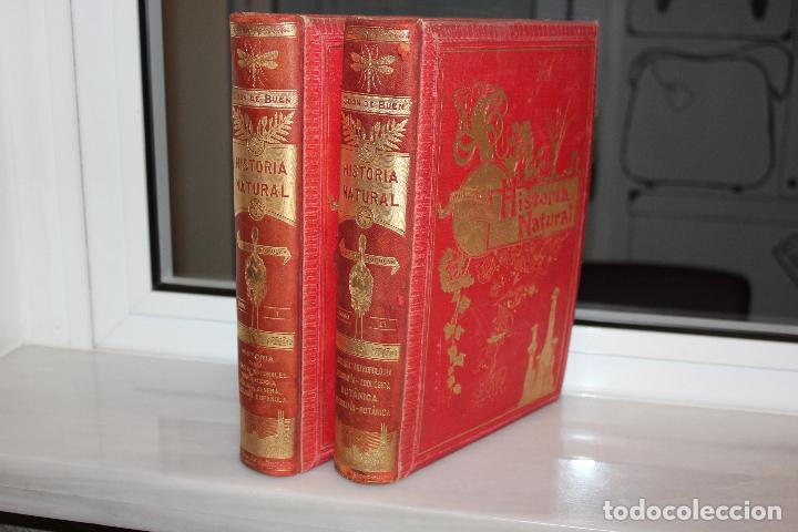 Libros antiguos: HISTORIA NATURAL POR ODON DE BUEN. 2 TOMOS. EDITORIAL MANUEL SOLER 1897. OBRA MUY ILUSTRADA.UNA JOYA - Foto 2 - 69373301