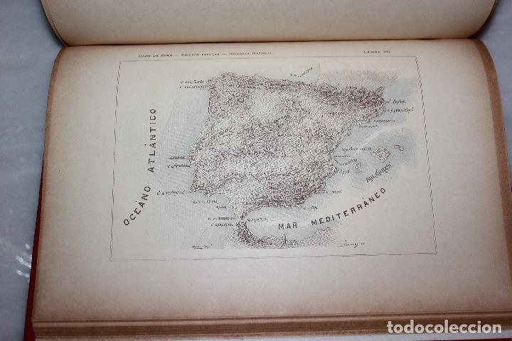 Libros antiguos: HISTORIA NATURAL POR ODON DE BUEN. 2 TOMOS. EDITORIAL MANUEL SOLER 1897. OBRA MUY ILUSTRADA.UNA JOYA - Foto 8 - 69373301