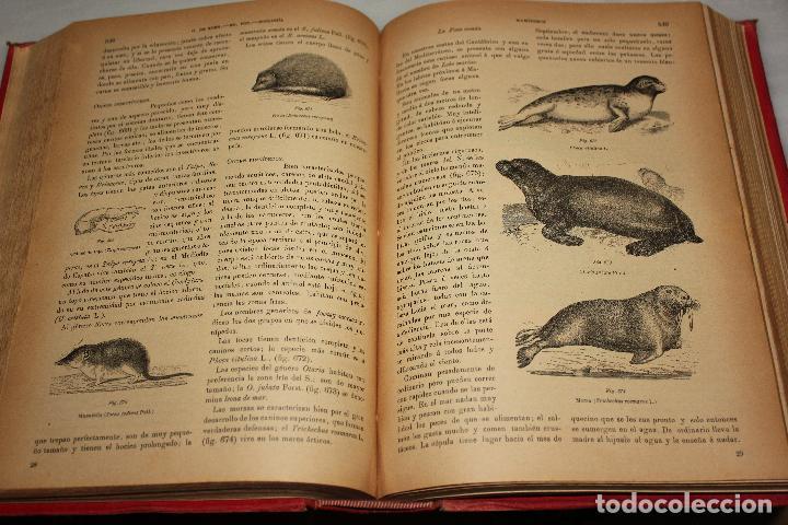 Libros antiguos: HISTORIA NATURAL POR ODON DE BUEN. 2 TOMOS. EDITORIAL MANUEL SOLER 1897. OBRA MUY ILUSTRADA.UNA JOYA - Foto 11 - 69373301