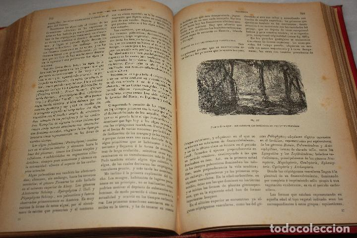 Libros antiguos: HISTORIA NATURAL POR ODON DE BUEN. 2 TOMOS. EDITORIAL MANUEL SOLER 1897. OBRA MUY ILUSTRADA.UNA JOYA - Foto 12 - 69373301