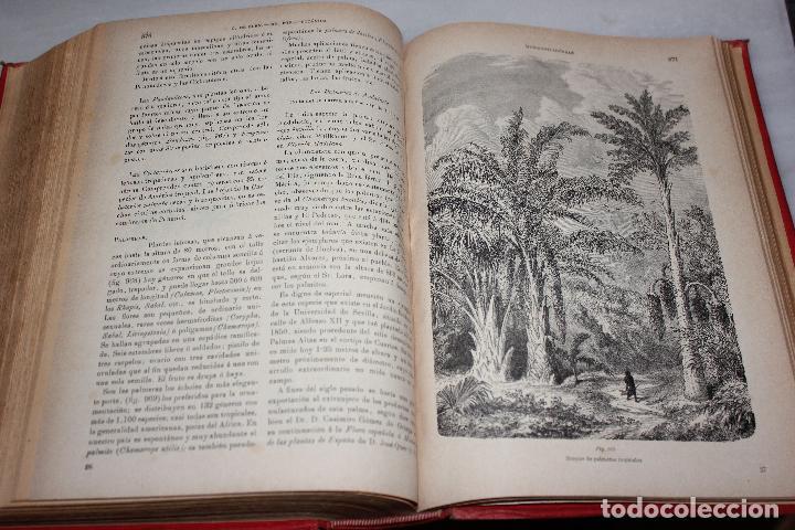 Libros antiguos: HISTORIA NATURAL POR ODON DE BUEN. 2 TOMOS. EDITORIAL MANUEL SOLER 1897. OBRA MUY ILUSTRADA.UNA JOYA - Foto 13 - 69373301