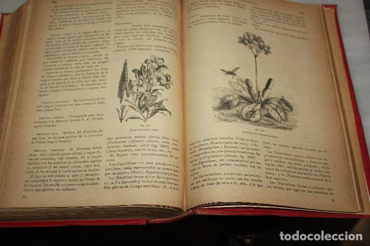 Libros antiguos: HISTORIA NATURAL POR ODON DE BUEN. 2 TOMOS. EDITORIAL MANUEL SOLER 1897. OBRA MUY ILUSTRADA.UNA JOYA - Foto 14 - 69373301