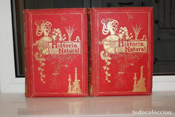 Libros antiguos: HISTORIA NATURAL POR ODON DE BUEN. 2 TOMOS. EDITORIAL MANUEL SOLER 1897. OBRA MUY ILUSTRADA.UNA JOYA - Foto 15 - 69373301
