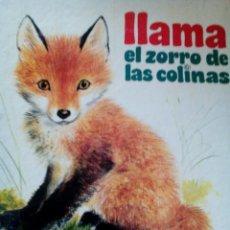 Libros antiguos: C2_LLAMA ,EL ZORRO DE LAS COLINAS,MIDE APROXIMADO 20X15PRIMEROS LIBRES,DE MIS PRIMEROS LIBROS. Lote 77307989