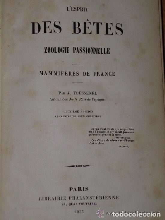Libros antiguos: L'esprit Des Bêtes. Zoologie passionnelle. Mammifères De france.(1855) - Foto 2 - 81092996