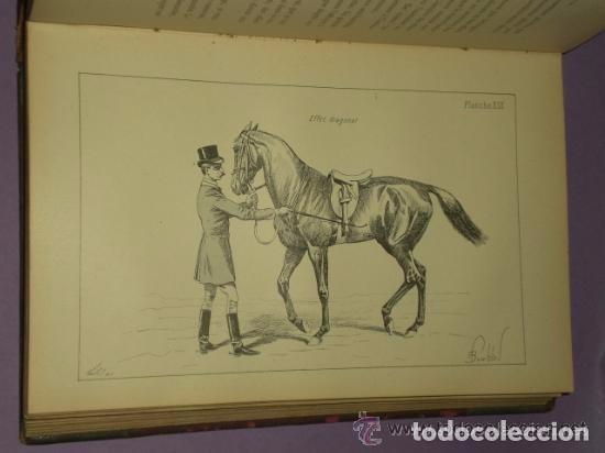 Libros antiguos: Principes de dressage et d équitation - Foto 7 - 82055912