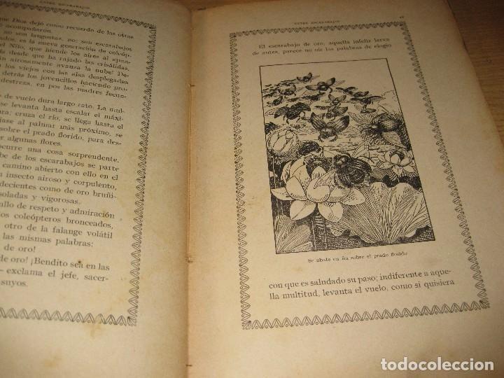 Libros antiguos: entre escarabajos , el canario y el jilguero . marinel.lo . il. opisso . col. natura - Foto 4 - 142307877