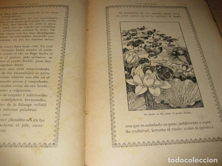 Libros antiguos: entre escarabajos , el canario y el jilguero . marinel.lo . il. opisso . col. natura - Foto 7 - 142307877