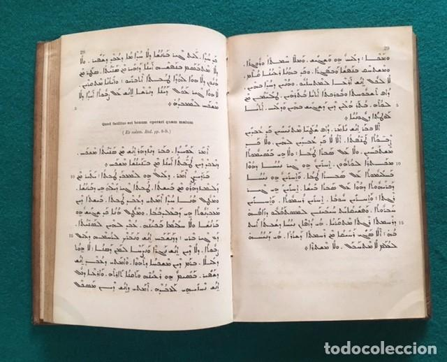 Libros antiguos: Gismondi, Henrico (S.J.), Linguae Syriacae. Grammatica et chrestomathia cum glosario scholis... - Foto 3 - 90825245